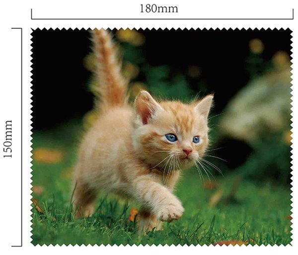 Mikrofaser Brillenputztuch – Kätzchen